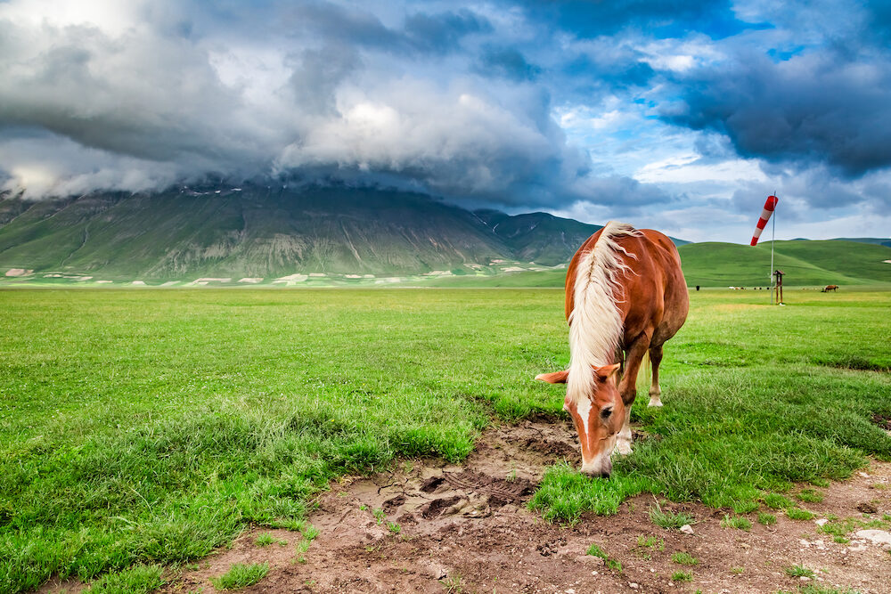 Beautiful horses in valley near Castelluccio Umbria Italy