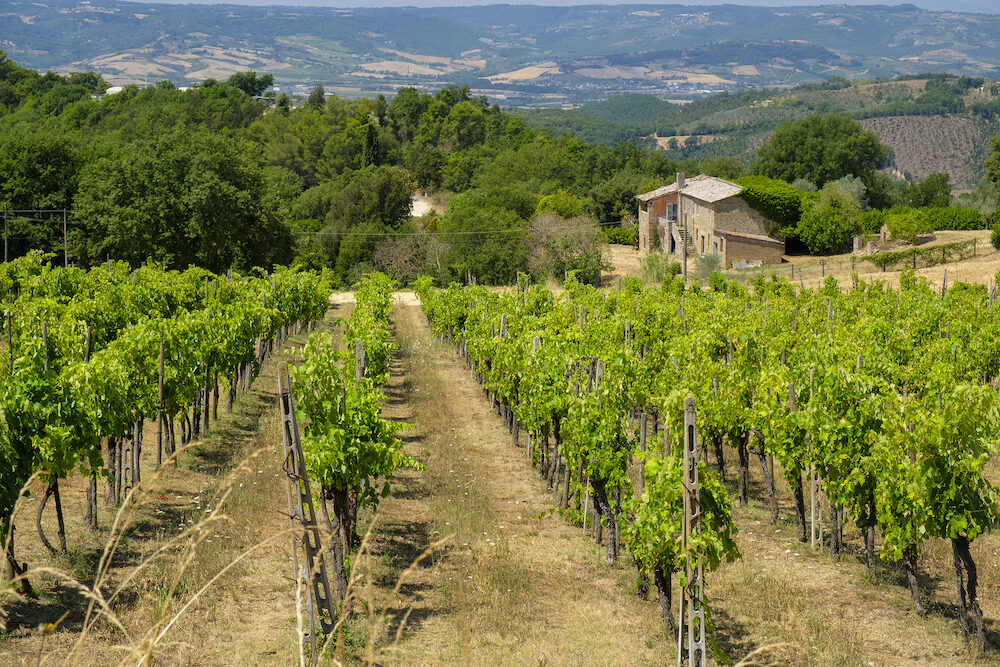 the road from Orvieto to Todi, Umbria, Italy, at summer. Vineyard