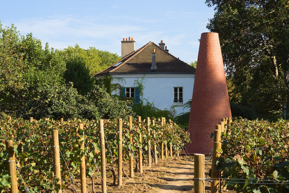 Vineyard at the house of gardening in Bercy area - Paris, France