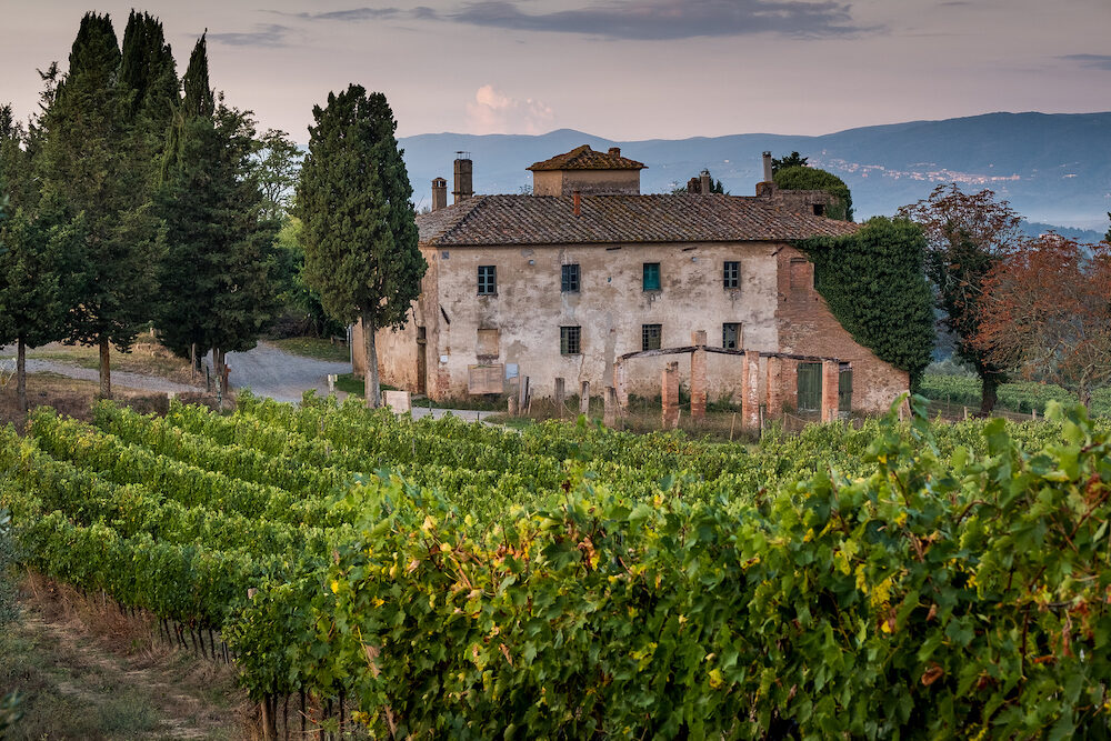 Peccioli, Pisa, Tuscany - Countryside landscape in the valley of Peccioli in the province of Pisa, Italy, processing and care of the vineyards of wine