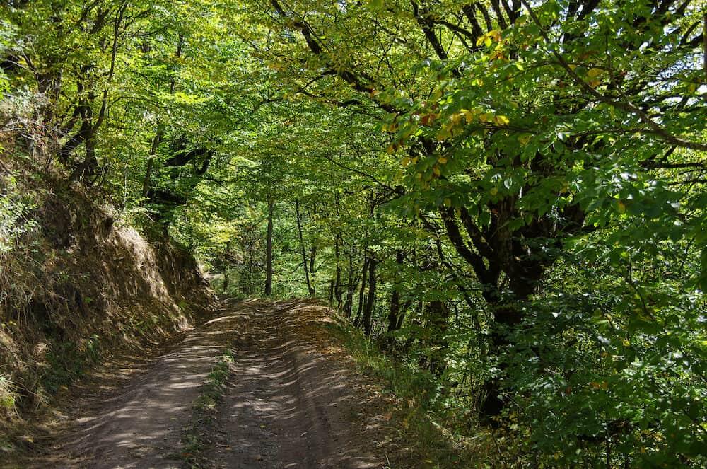 Dirt road thru forest in Dilijan National Park, Armenia