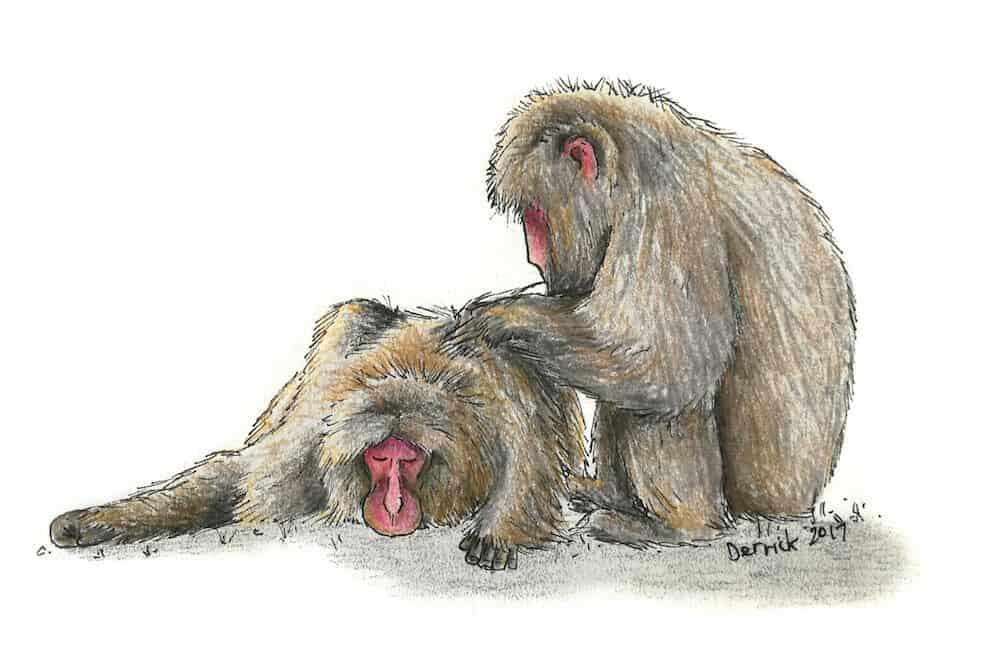 Snow-monkeys