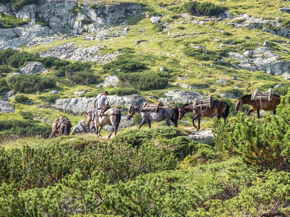 RILA MOUNTAINS, BULGARIA - A young man on a horse leads a horse convoy for a high mountain luggage transport near the Seven Rila Lakes