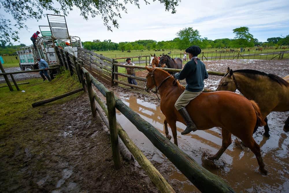 San Antonio de Areco, Argentina - : A young gaucho cowboy riding a horse in a paddock in San Antonio De Areco, Argentina.
