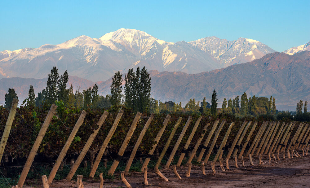 Early morning in the late autumn: Volcano Aconcagua Cordillera and Vineyard. Andes mountain range in the Argentine province of Mendoza