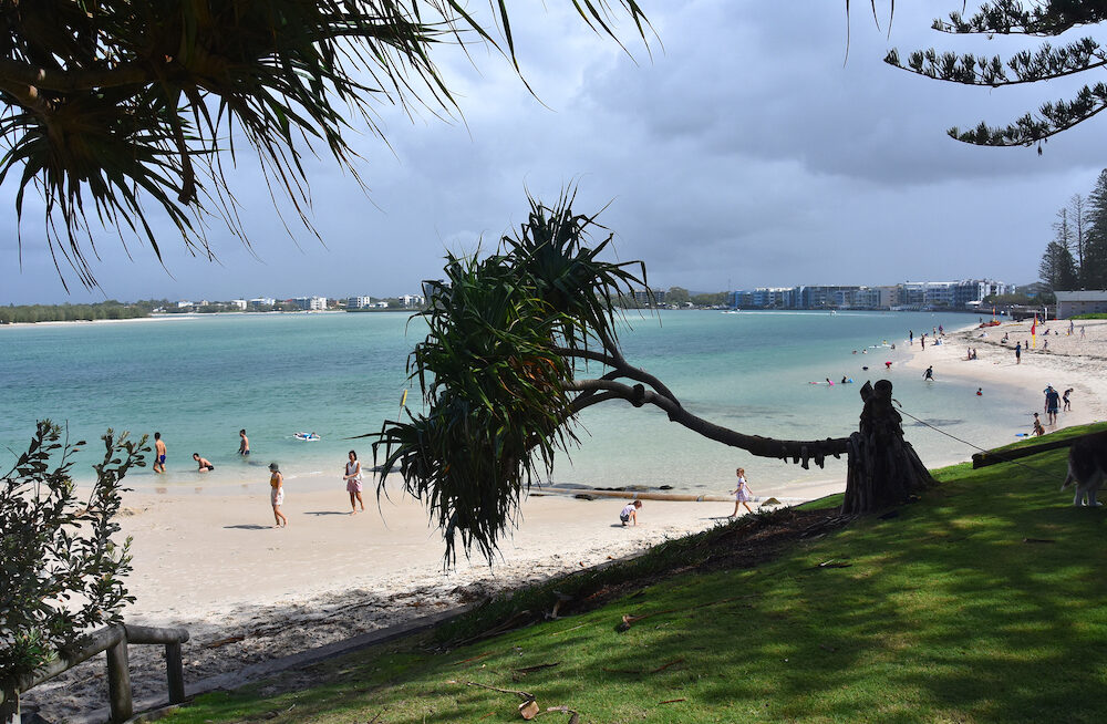 Caloundra, Australia - Fallen tree in the park. People having fun at Bulcock beach. View from Happy Valley Park (Sunshine Coast, Queensland, Australia).