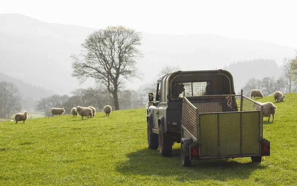 Healthy animal livestock feeding in a lush rural environment.