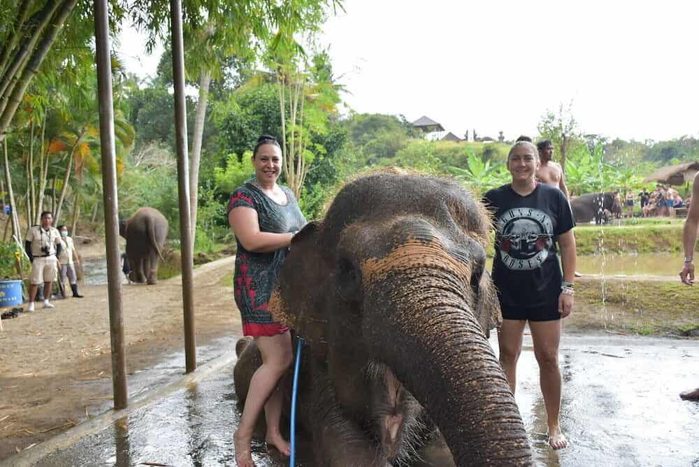 Mud Bath with the Elephants