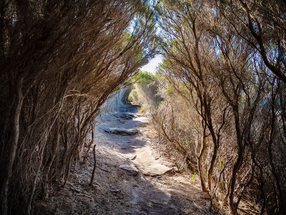 Path through a tree tunnel in Royal National Park in Sydney
