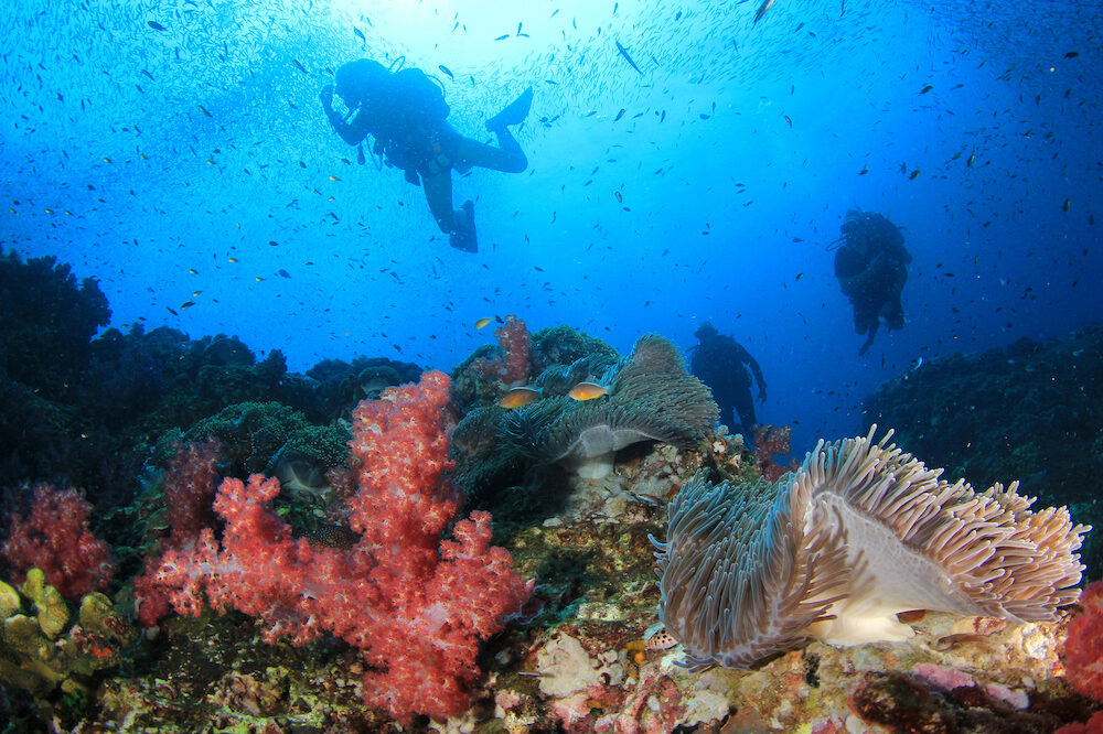 Scuba diving on coral reef in Thailand