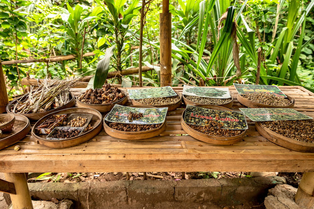 Different coffee beans on a table on a coffee plantation in Bali