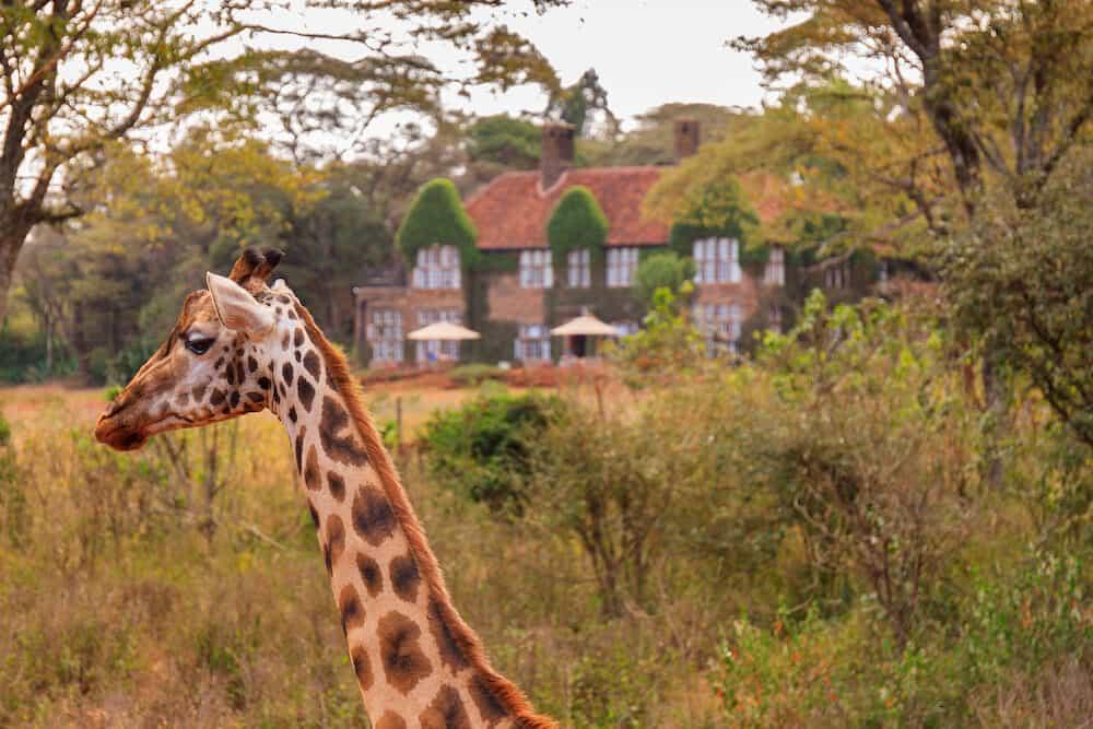The Giraffe Centre located near Nairobi, Kenya
