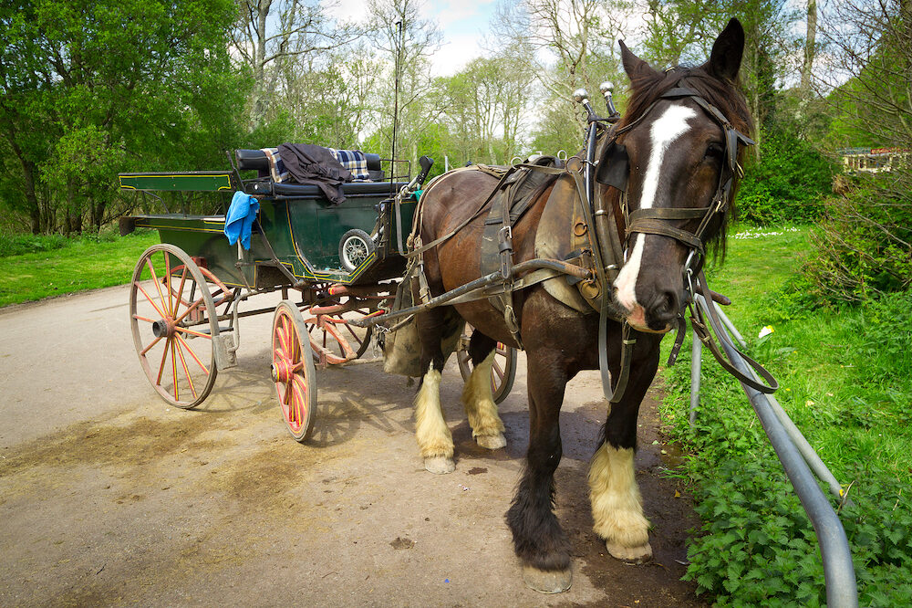 Horse ride in Killarney National Park