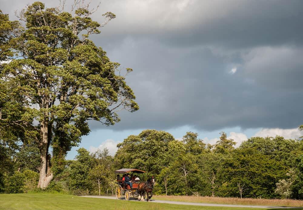 jaunting car passing through Killarney national park