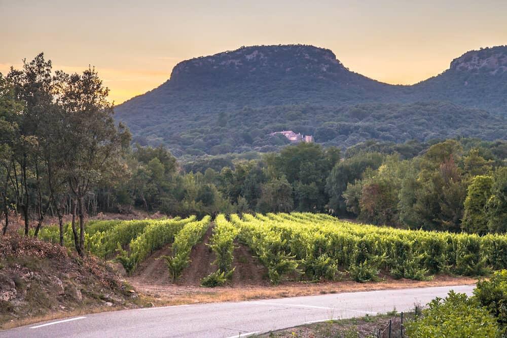 Vineyard at sunset in Cevennes National Park, Southern France