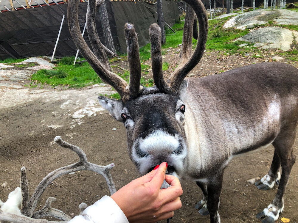 Meet and feed Santa's Reindeer at Santa's Village