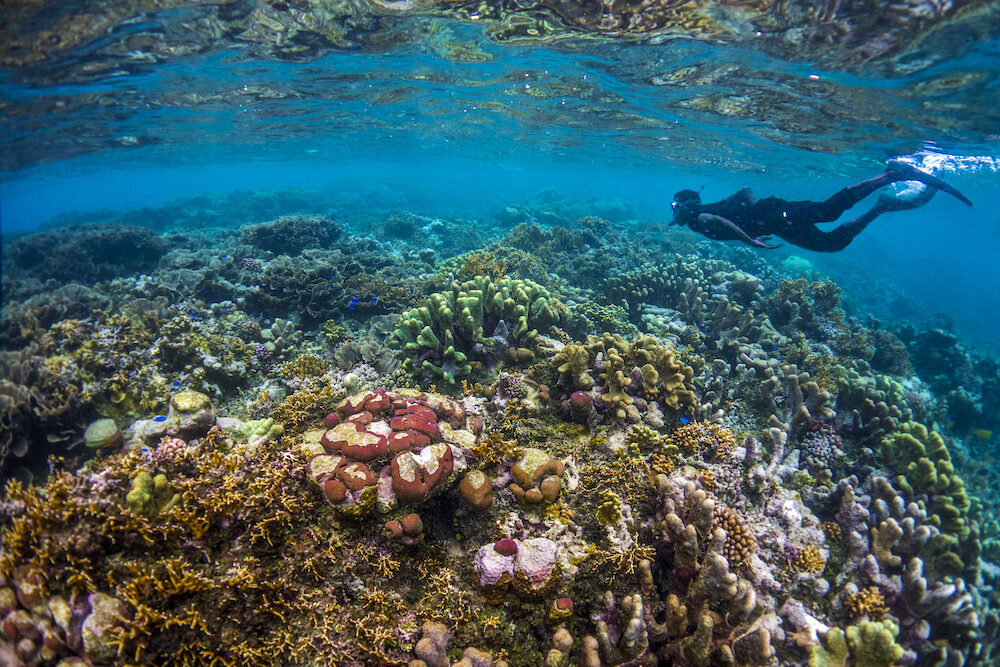 Snorkelling and diving in the Solomon Islands