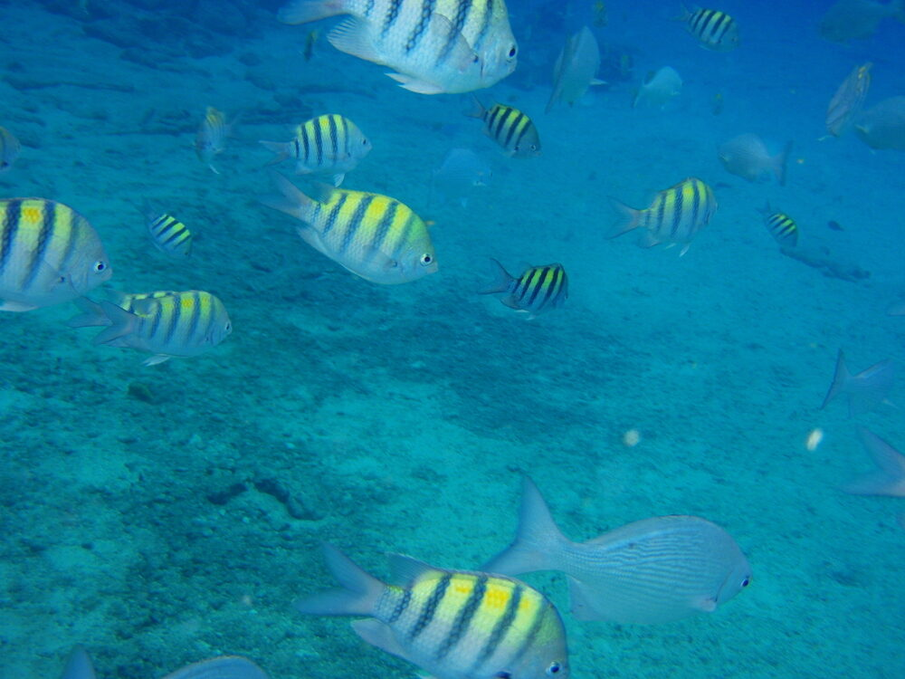 view of people Scuba Diving in caribbean sea