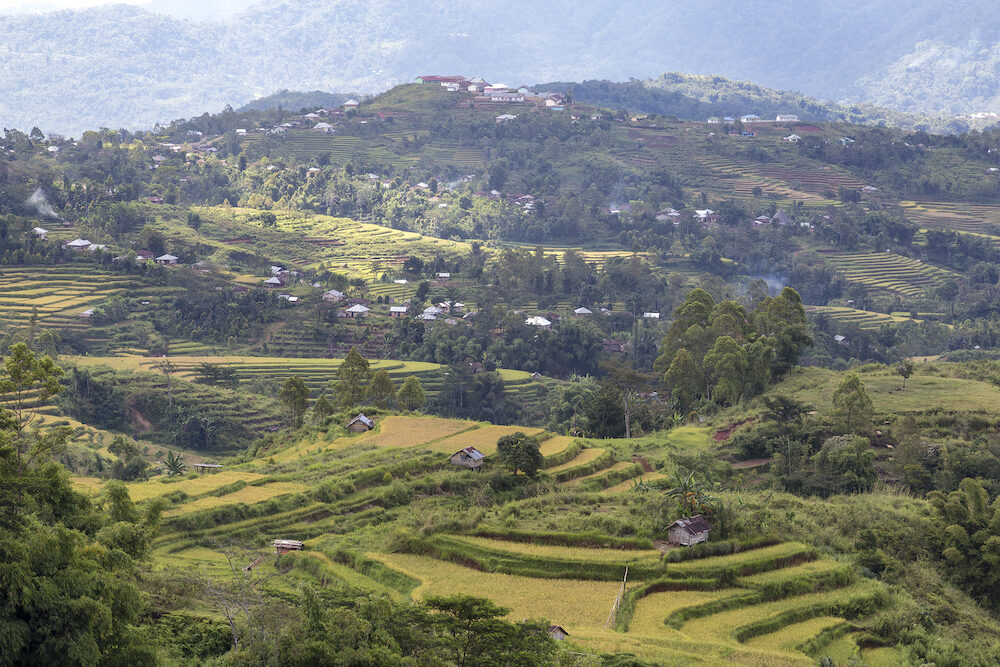 Zoomed view of the Golo Cador Rice Terraces in Ruteng on Flores, Indonesia.