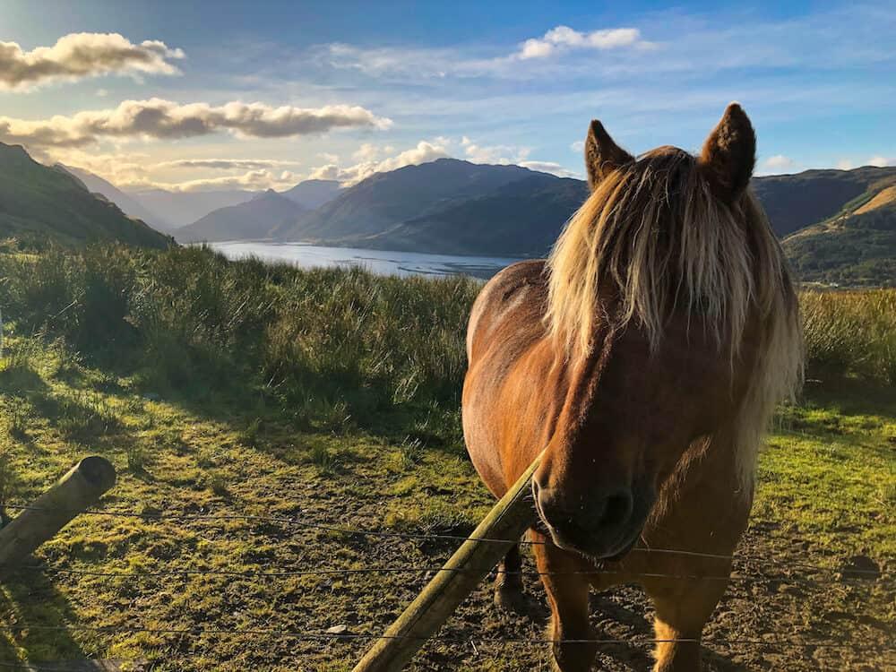 Horses on Unicorn road