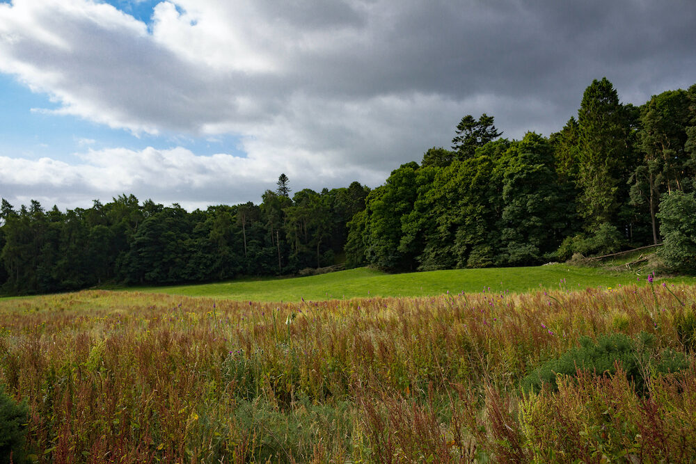 Beautiful view of a forest and meadow in the Scottish Highlands near Inverness.