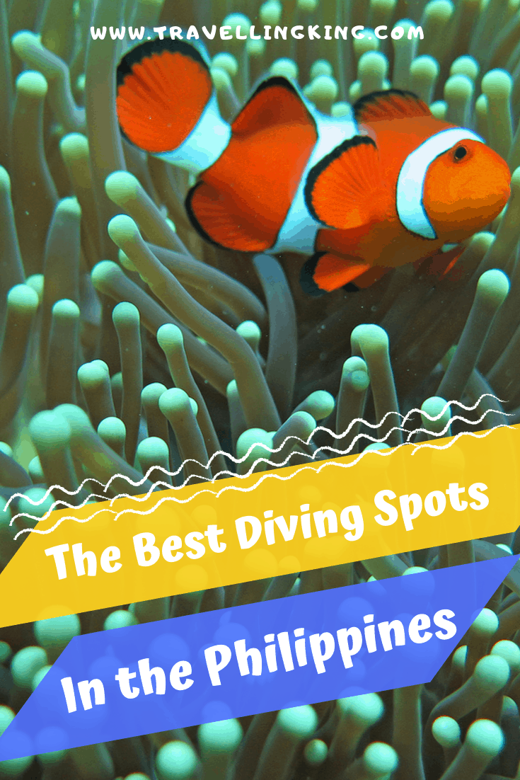 The Best Diving Spots in the Philippines