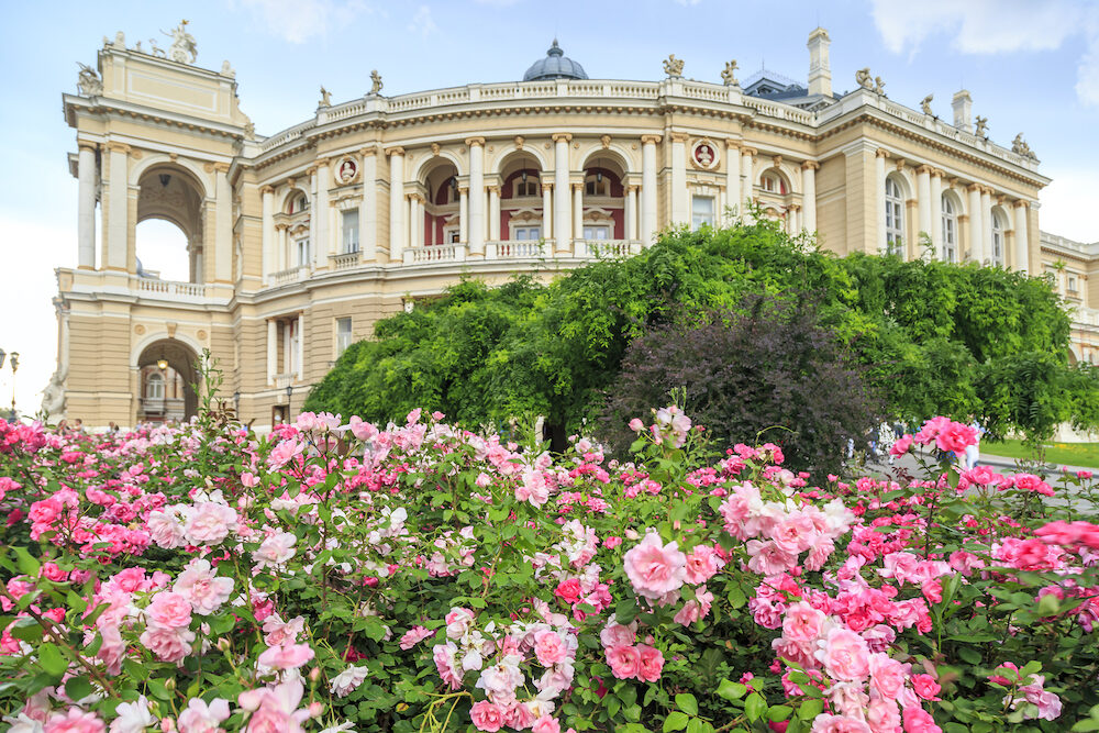 Odessa garden with pink roses with Odessa ballet and opera house in Odessa, Ukraine
