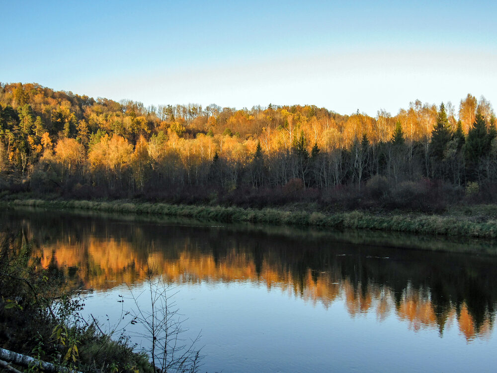 Magnificent yellow sandstone outcrops, cliffs, rocks and caves along steep river banks and autumn colored trees reflections in water, Gauja National park, Latvia