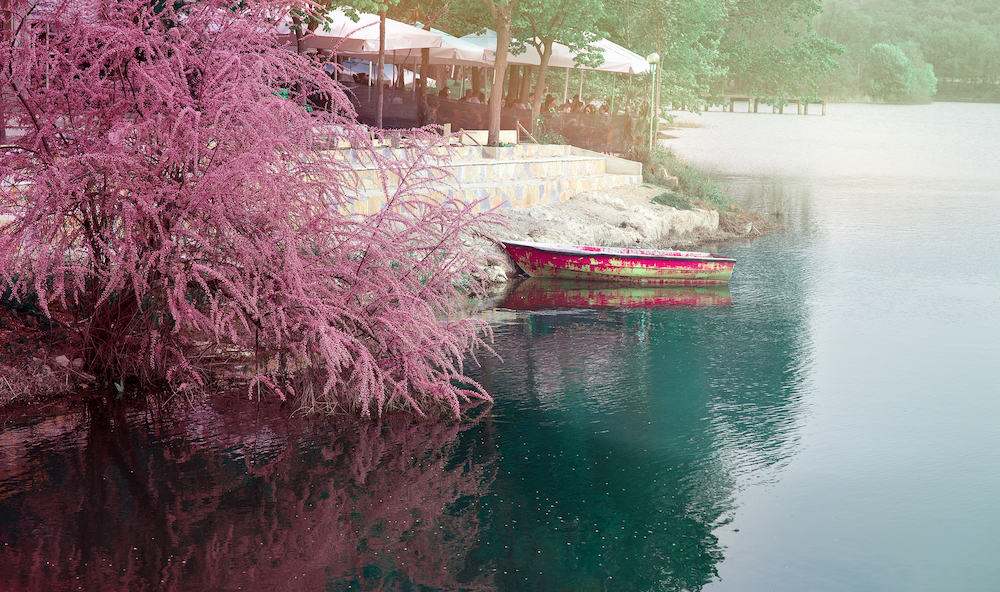 Tirana, Albania. Artificial lake of Tirana blooming pink tree and a boat parked. People citizens of Tirana enjoying sun sitting in an outdoors cafe