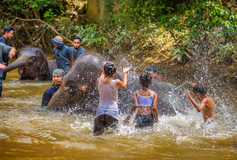 Kuala Gandah, Malaysia - : Young malaysians bath baby elephants in the Sungai Teris river located in Krau Wildlife Reserve.
