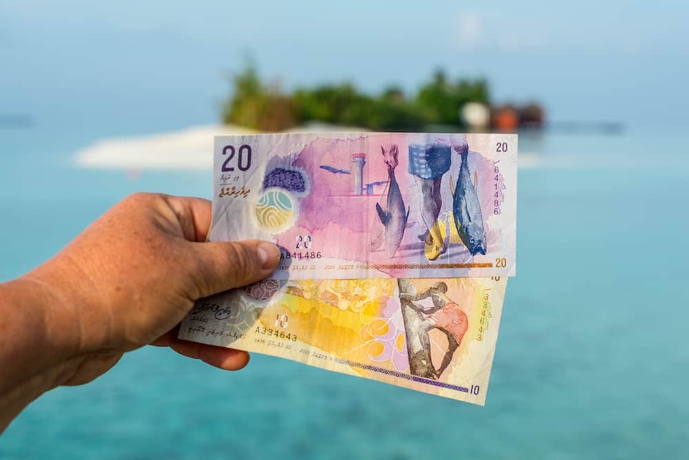 A tourist's show Maldivian rufiyaa bank note when she traveling in Maldives. Money of Maldives bank note in female's hand on the background of the island, salary incomes.