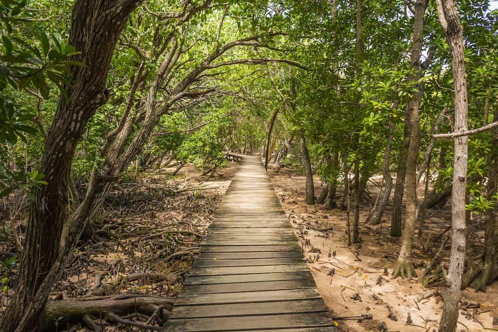 Path to the beach through mangrove forest