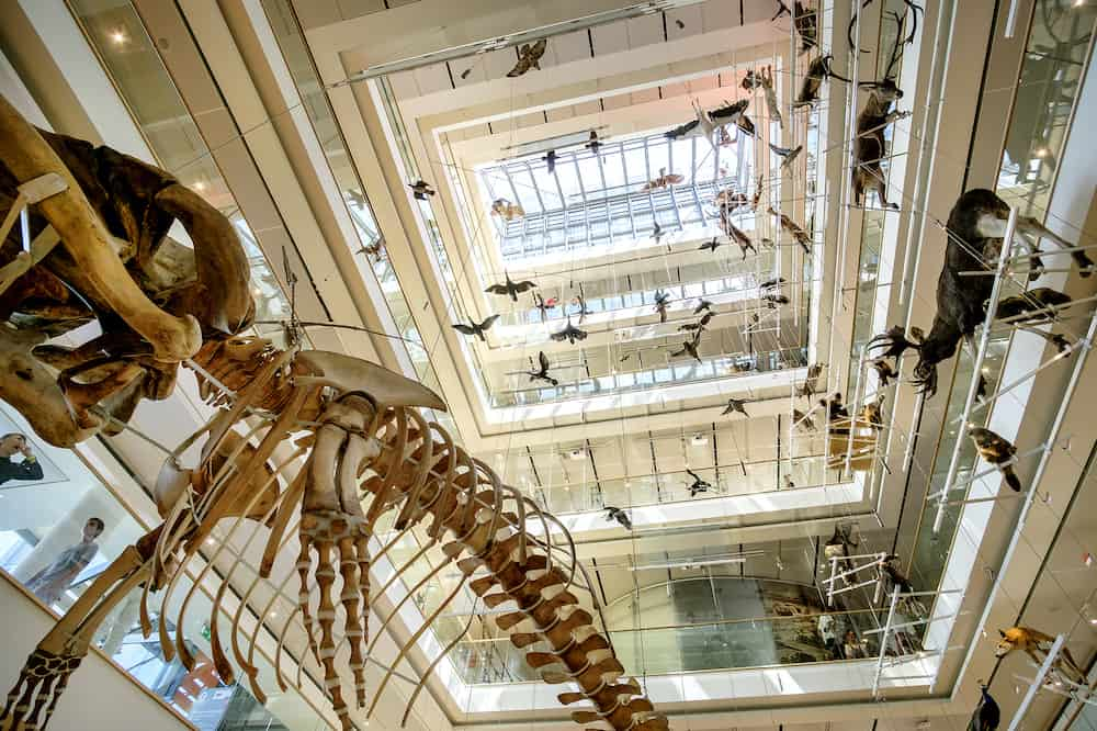 Trento, Italy- Museum of Natural History MuSe designed by Renzo Piano main lobby with embalmed animals and whalebone
